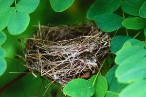 Mother lessons from an empty nest